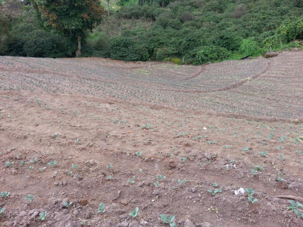 vendo finca agrícola en producción