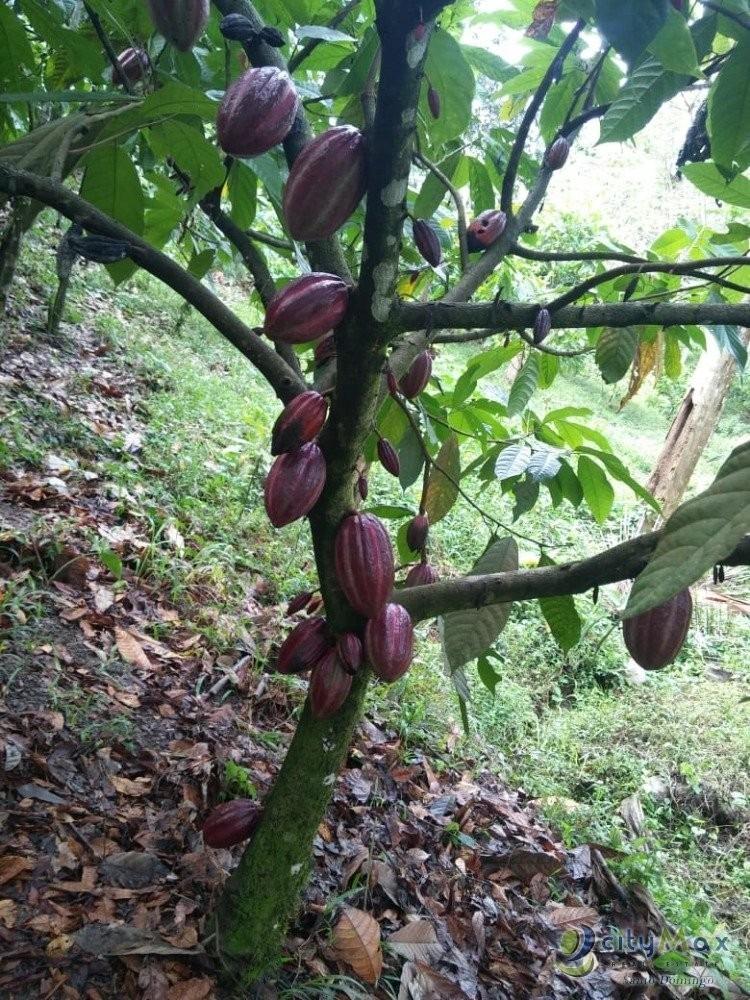 vendo finca cacaotera en autovía del nordeste