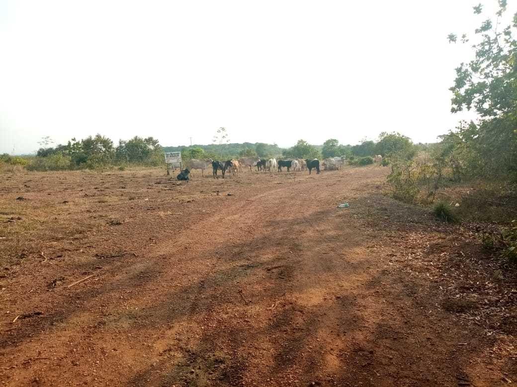 vendo finca de 250 hectáreas apta para agricultura y/o ganad