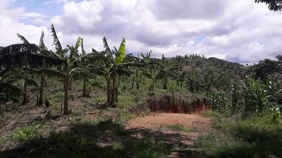 vendo finca de 30 hectáreas en cabandia municipio de falan .