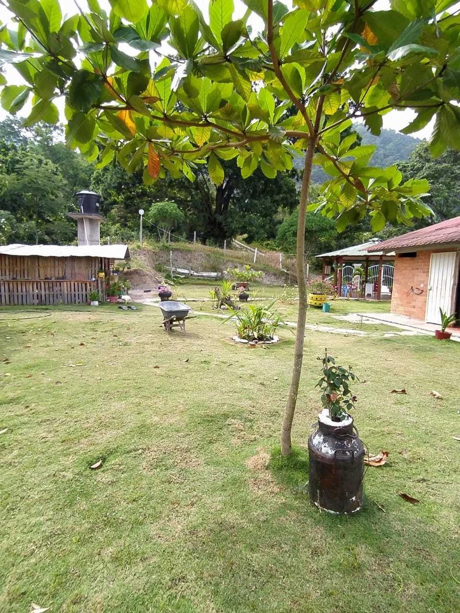 vendo finca de 7 hectáreas  en  el municipio de lebrija sant