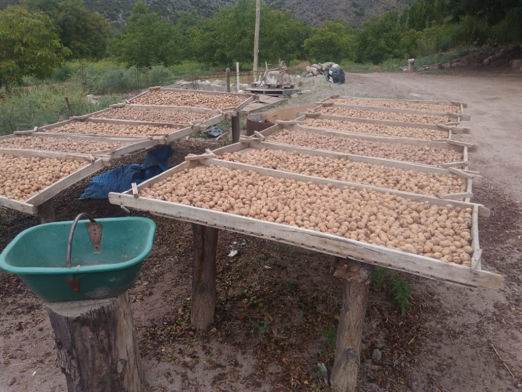 vendo finca en producción de nogales famatina la rioja