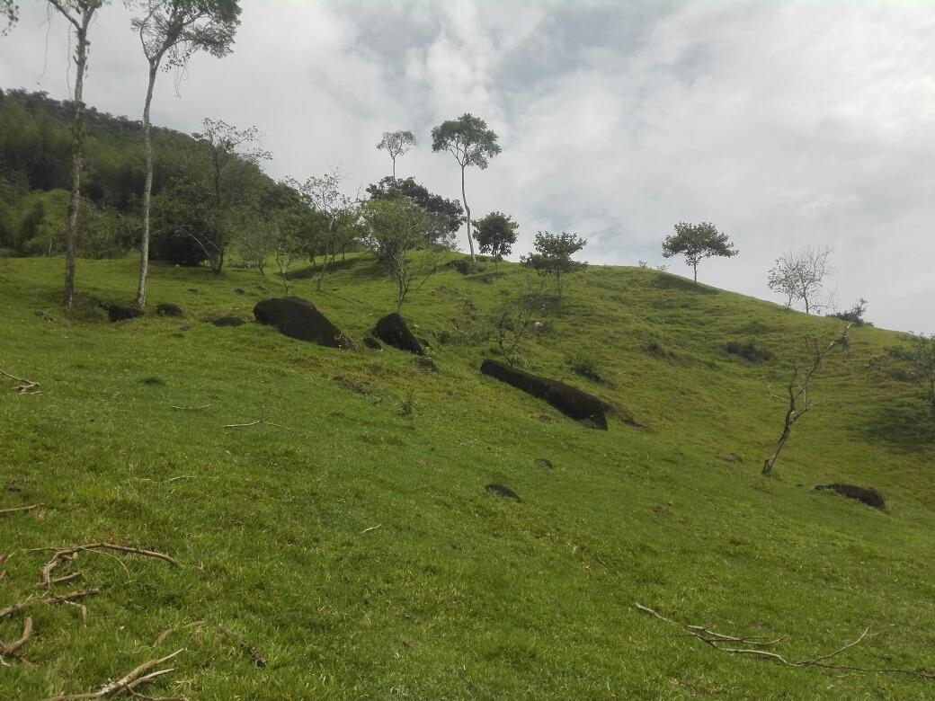 vendo finca ganadera o para proyectos agricolas o turisticas