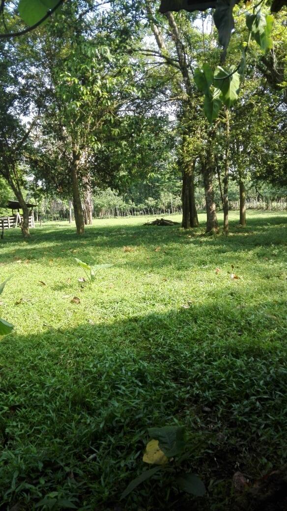 vendo finca para ganado, agricultura. 10.6 hectáreas.