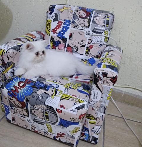 vendo gato persa legítimo