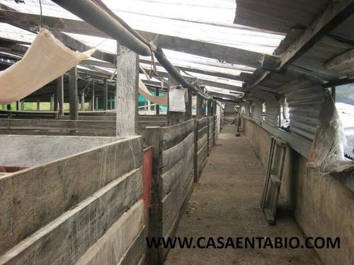 vendo granja productiva en san jorge