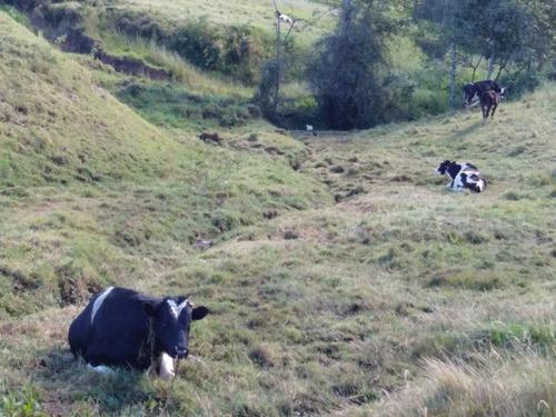 vendo hectareas de terreno en la mejor zona de cajamarca