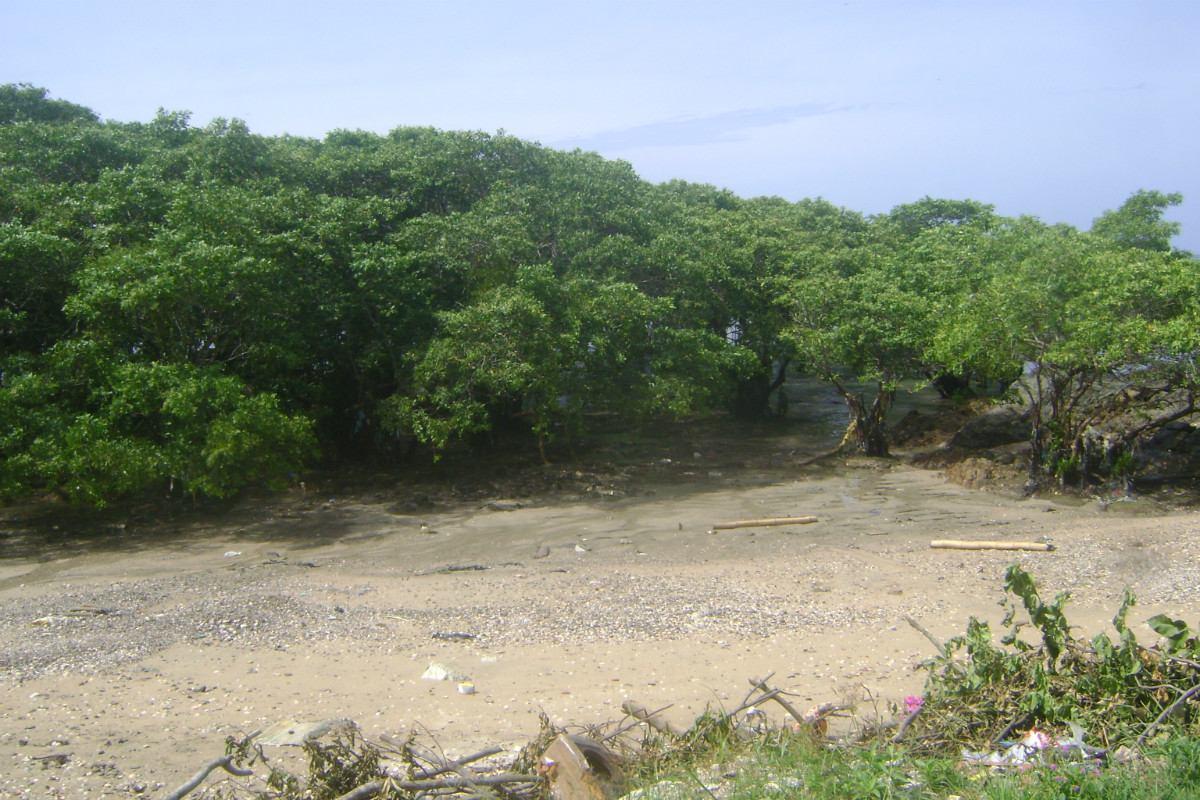 vendo lote de terreno de 2450 m2 en veracruz a orilla playa