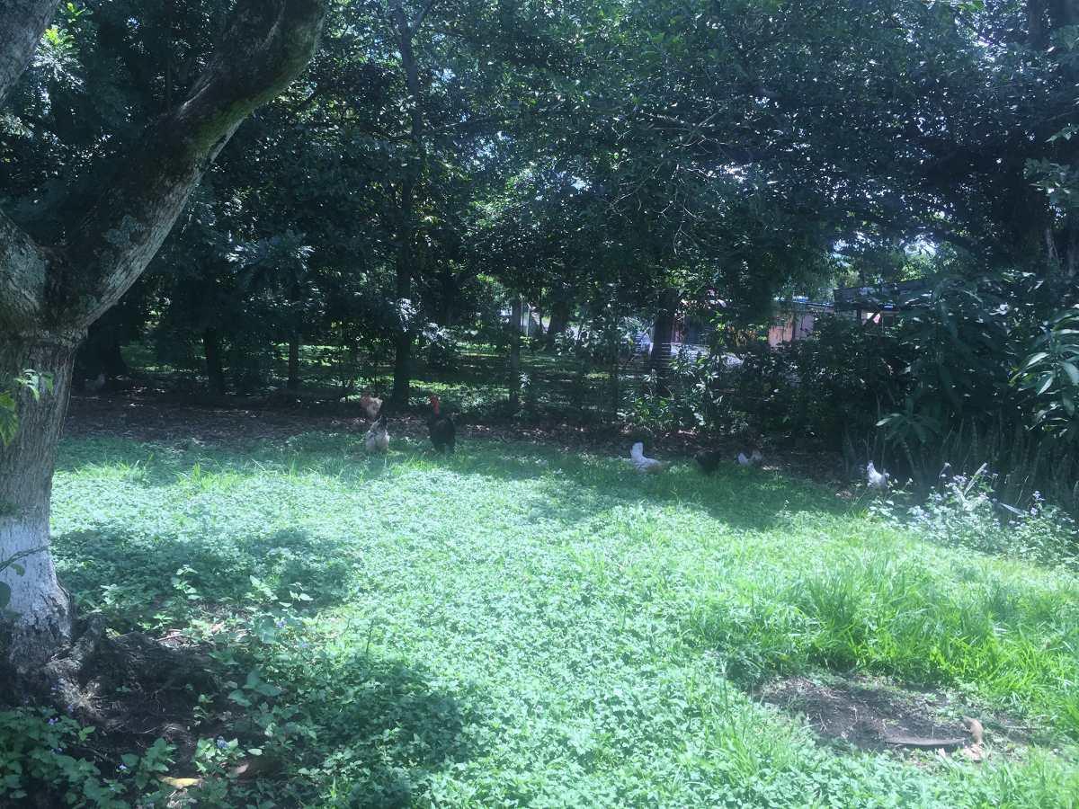 vendo lote en turrúcares con uso de suelo comercial
