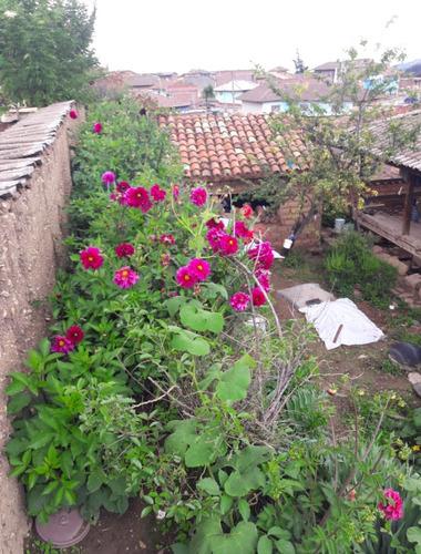 vendo membrillo cedron ruda calabaza huancayo