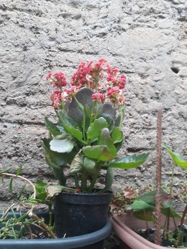 vendo plantas e esterco