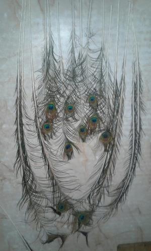 vendo plumas de pavo real