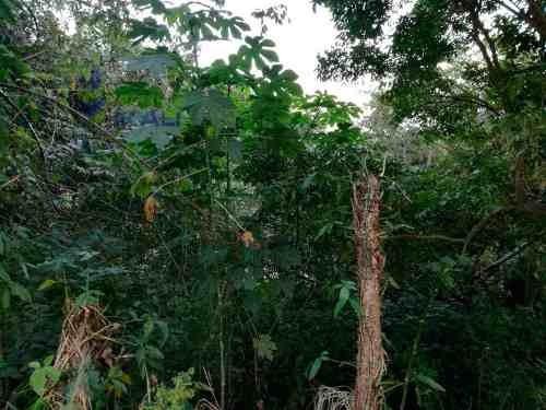 vendo terreno 291.96 m² col. loma bonita en poza rica veracruz, se encuentra ubicado en la colonia loma bonita, cuenta con 291.96 m² son 14.85 m de frente por 19.67 m de fondo, el tipo de terreno es