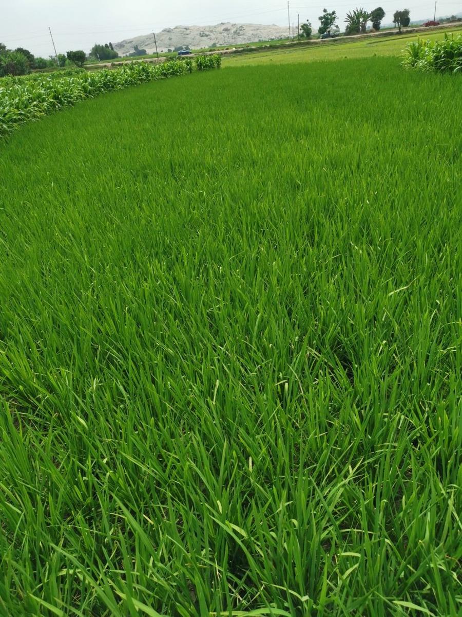 vendo terreno agricola en santa chimbote
