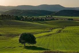 vendo terreno em uma ótima região. 036
