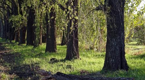 vendo terreno en las moras ricardone