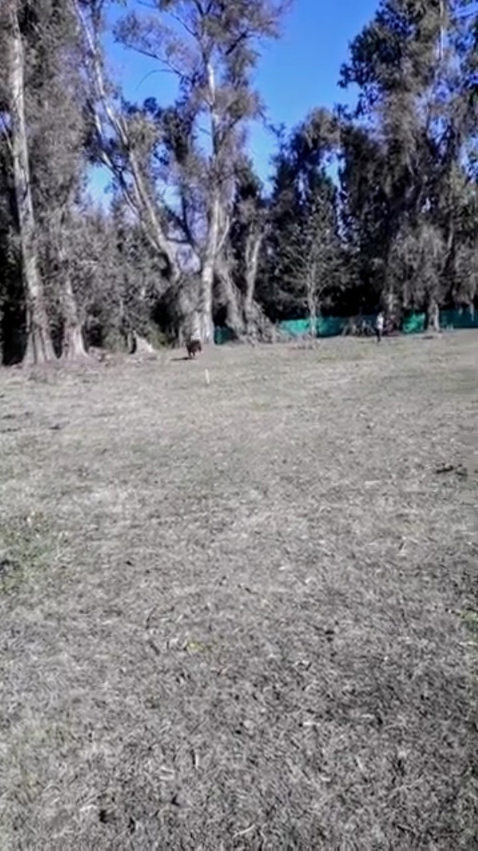 vendo terreno en oliveras