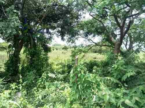 vendo terreno en sabanillas tuxpan veracruz una hectárea, se encuentra ubicado en la carretera a tuxpan - tamiahua en la localidad de sabanillas, cuenta con 10,000 m² son 50 m. de frente por 200 m. d
