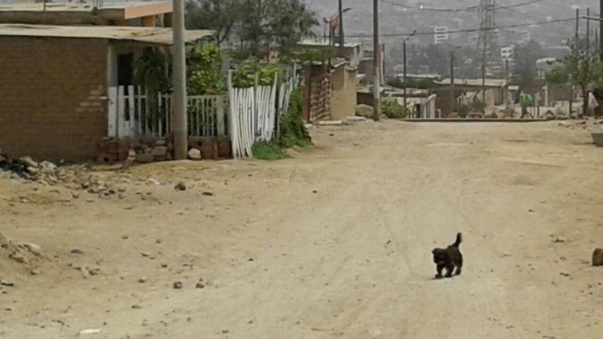 vendo terreno en san benito de carabayllo