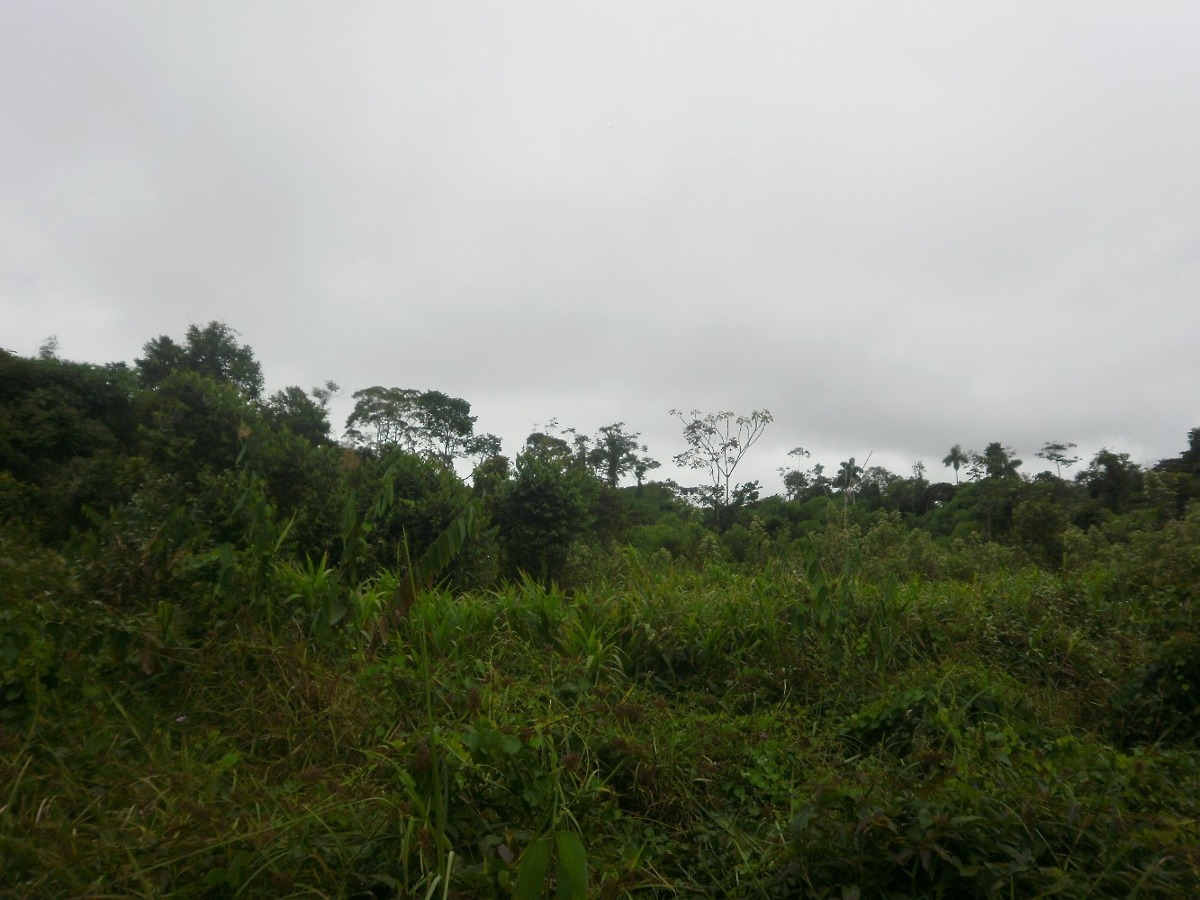 vendo terreno kosñipata/paucartambo/cuso: $: 1,000 hectárea