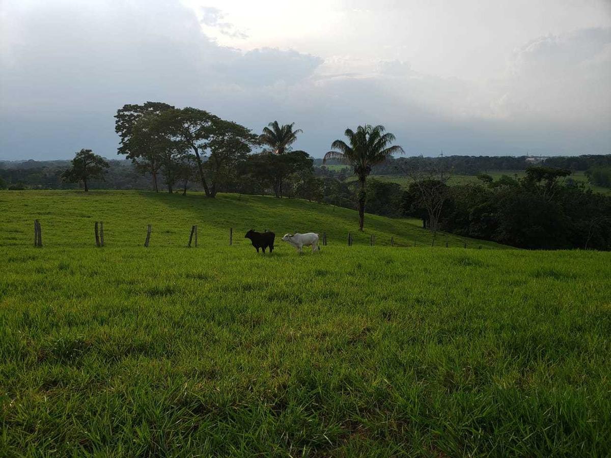 vendo terreno productivo san isidro de chichimene