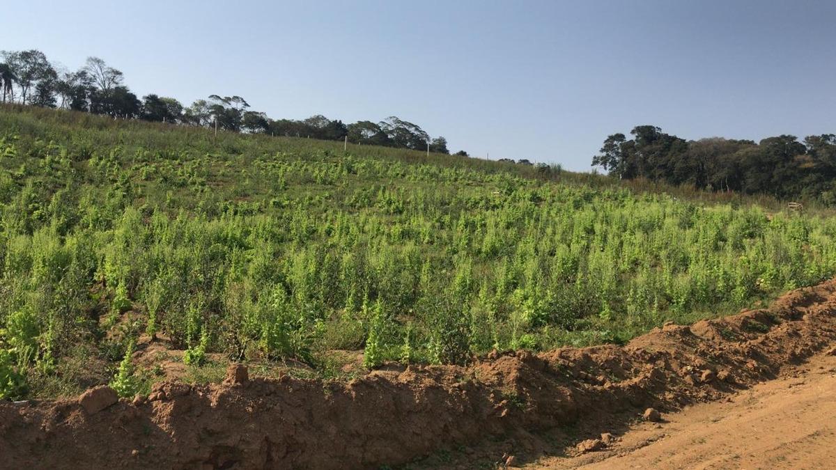 vendo terrenos em ibiúna sp 600 m2 demarcados e planos j