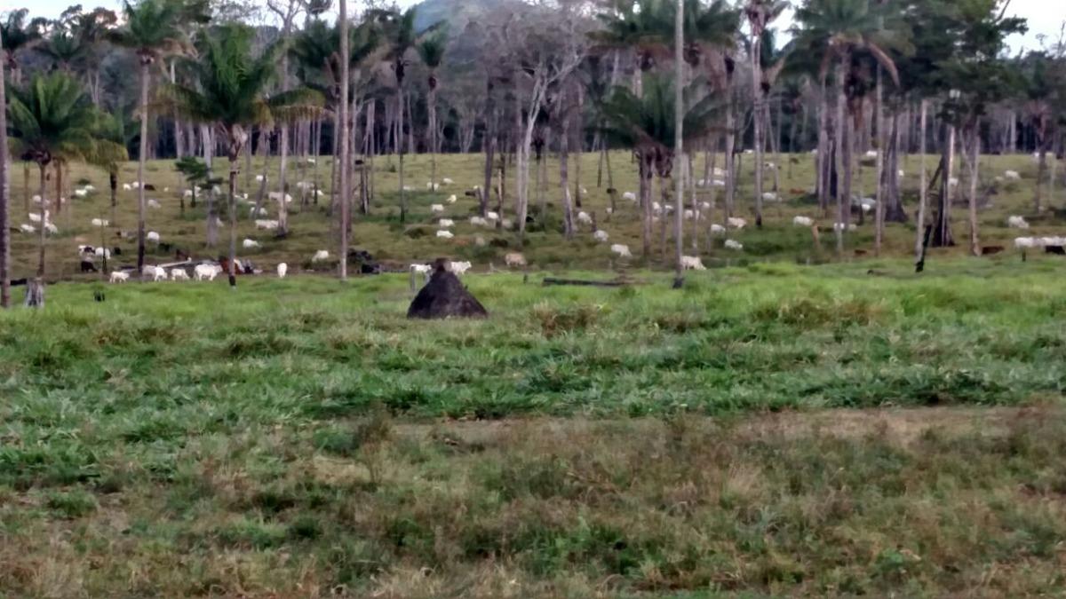 vendo /troco fazenda estado roraima ( cod:4135 )