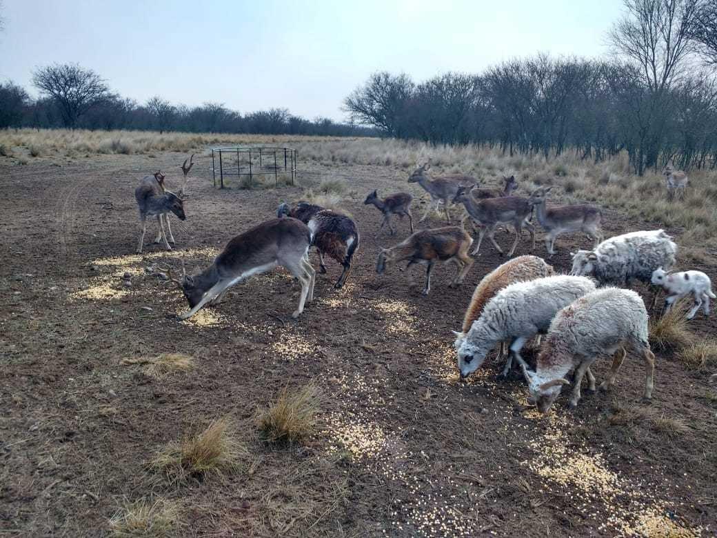 vendo y/o campo ganadero con coto d caza armado en la pampa!