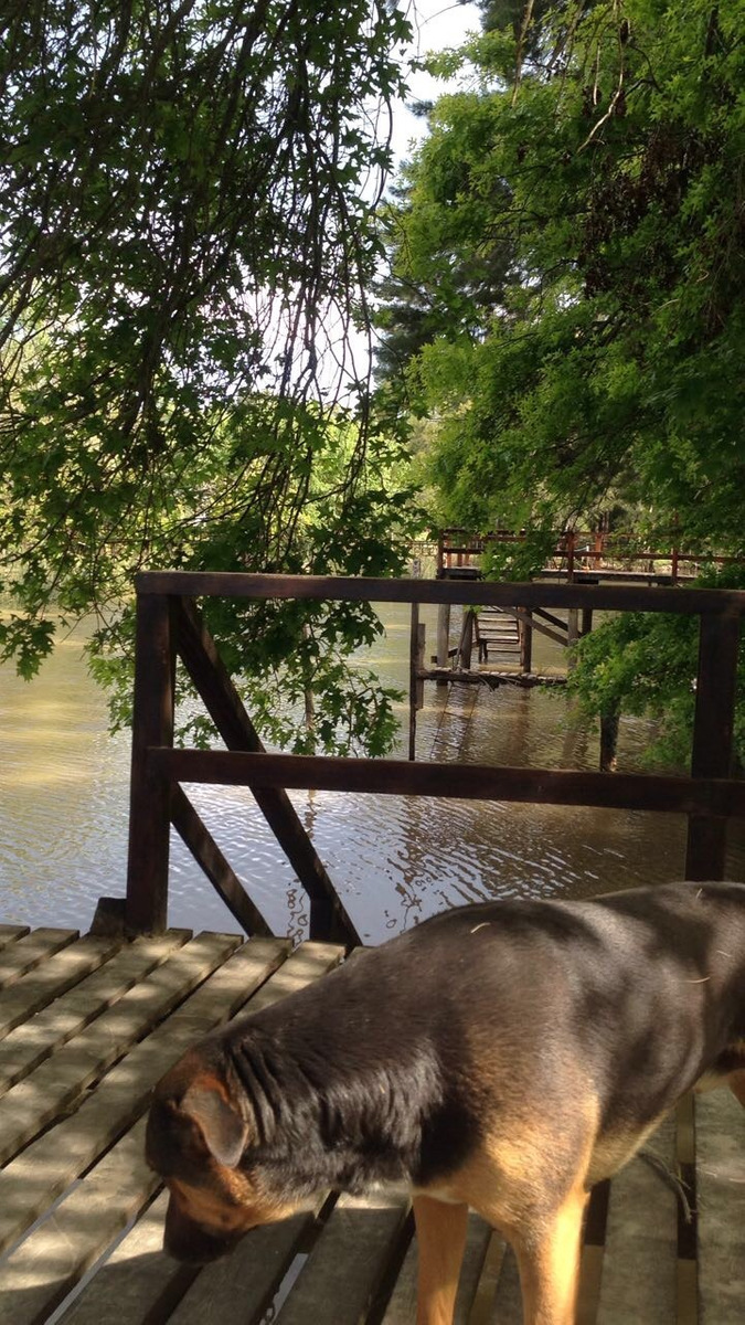 venta 3 ambientes isla tigre/delta dorado y arroyón cabaña