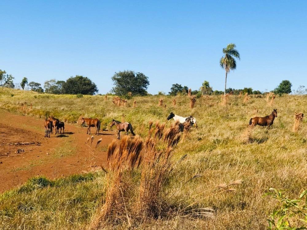 venta campo 367 hectareas sobre ruta