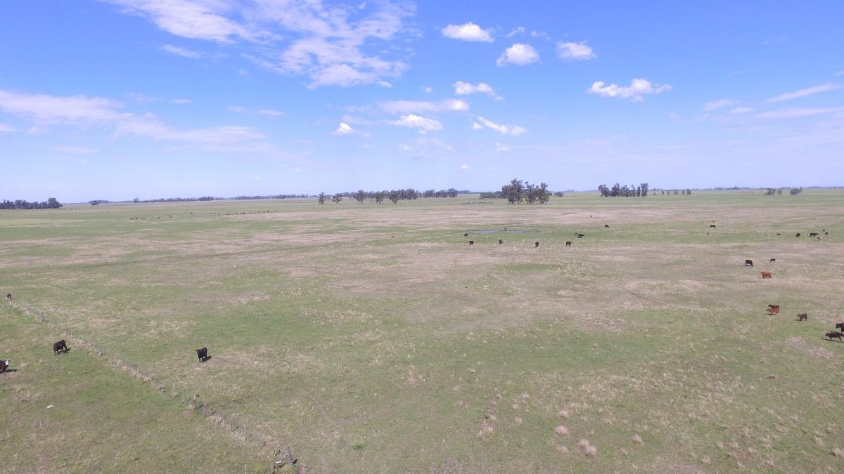 venta campo 50 hectareas mixtas ubicado en mercedes (b)