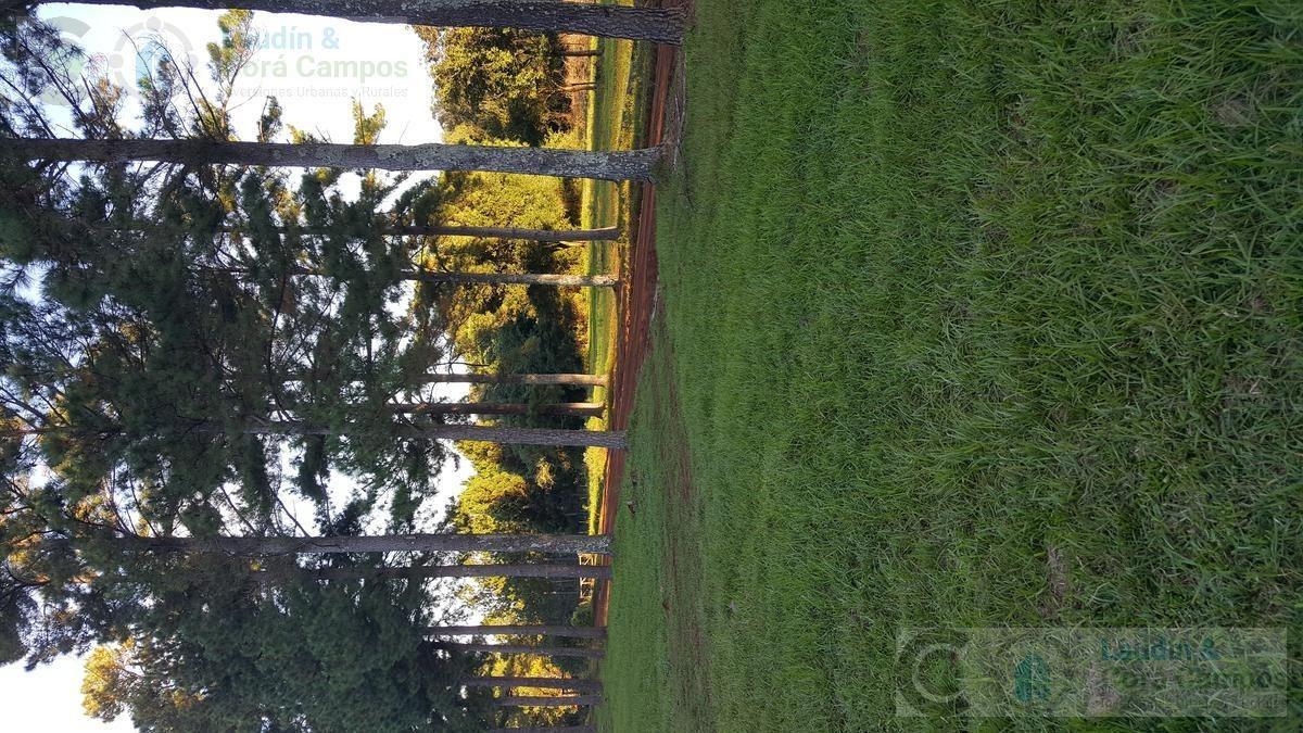 venta campo con yerba y pino-  asfalto- apóstoles