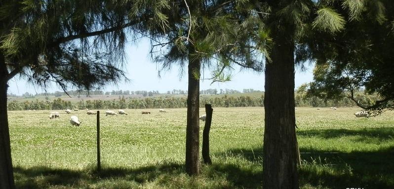 venta campo ganadero en uruguay 244has