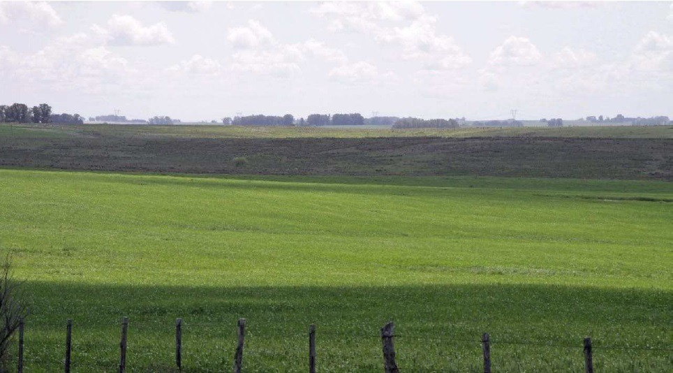 venta campo ganadero en uruguay 595 has