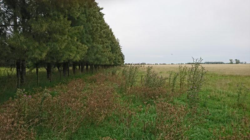 venta campo ganadero magdalena-pcia de buenos aires