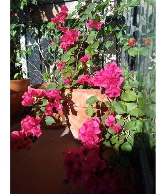 venta casa art dèco en flores