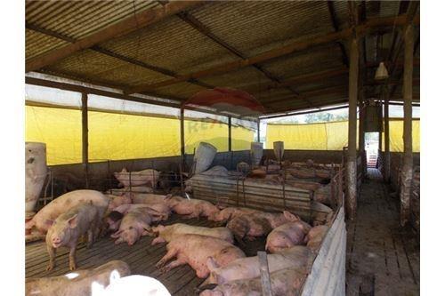venta chacra financiada con emprendimiento porcino