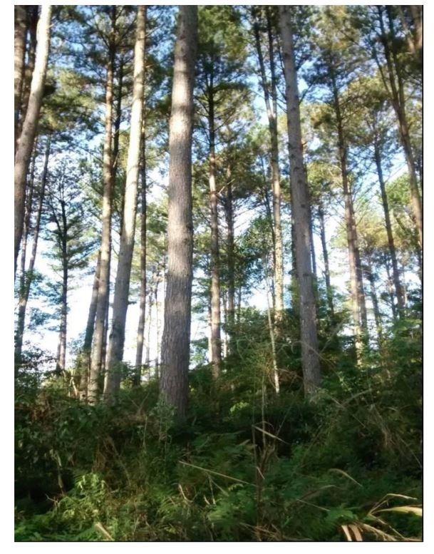 venta chacra misiones con pino y eucaliptus. arroyo.