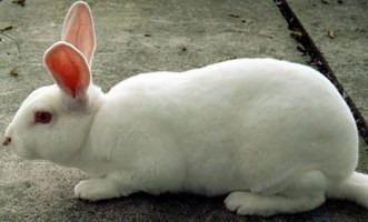 venta conejos para cría