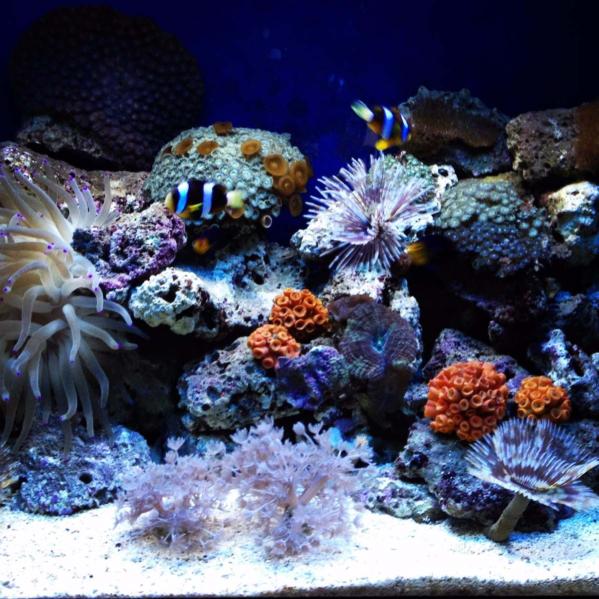 Venta de agua salada para acuarios marinos sal marina for Compro estanque de agua
