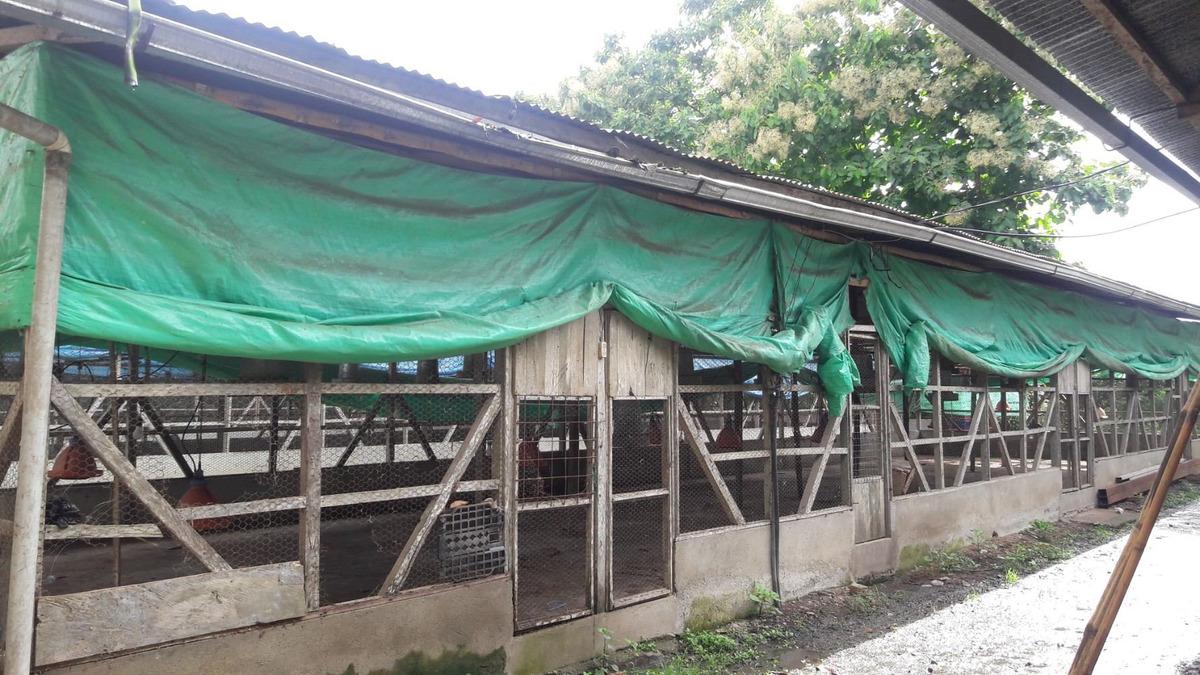 venta de avicola y finca cacaotera