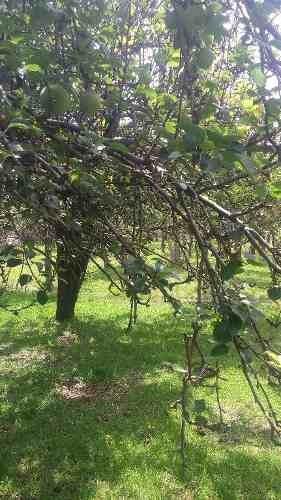 venta de casa - terreno en santa rita municipio de tlahuapan estado de puebla