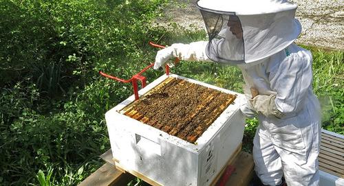 venta de colmenas de abeja, mantenimiento y captura de abeja