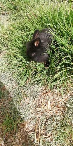 venta de conejos de raza. granja de cunicultura los garcias