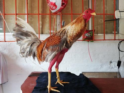 venta de gallos finos