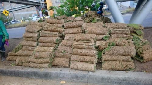 venta de grama japonesa