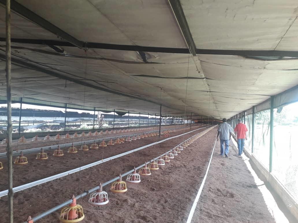 venta de granja productora de pollos entinaquillo bg415364 r