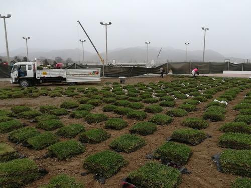 venta de grass natural somos productores de grass americano