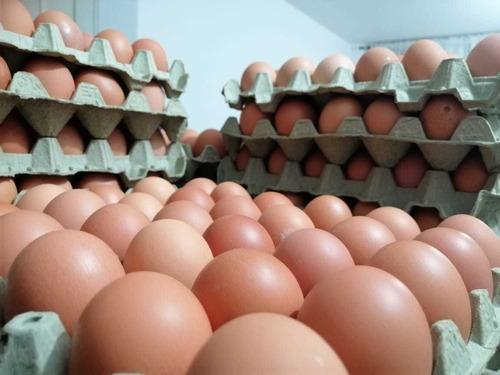 venta de huevos (aa - aaa) al por mayor y al detal.