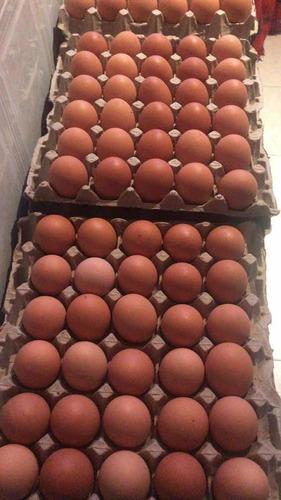 venta de huevos aa y aaa